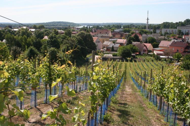 Blick vom Galgenberg 2013
