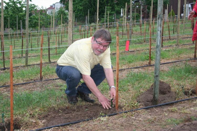 Vereinsmitglied Frank Watzke pflanzt Pinotin (2012)